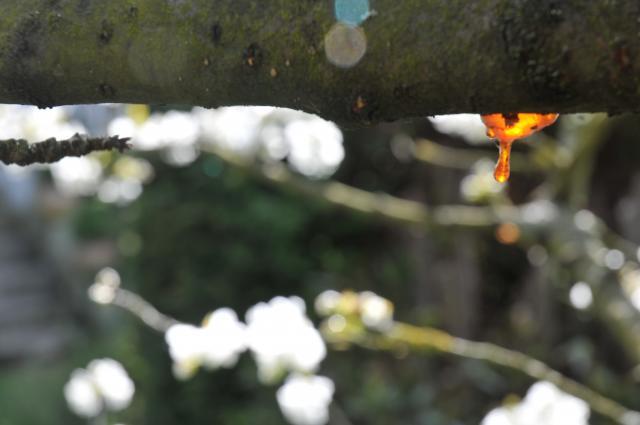 http://son-et-lumiere.cowblog.fr/images/DSC0745.jpg