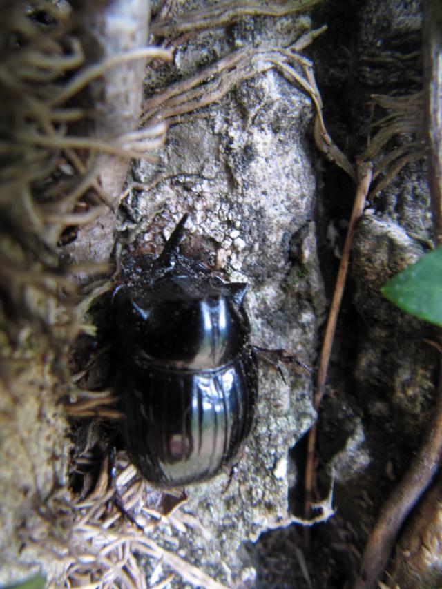 http://son-et-lumiere.cowblog.fr/images/IMG7419.jpg