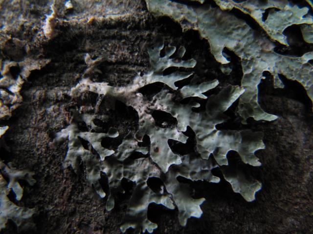 http://son-et-lumiere.cowblog.fr/images/IMG7475.jpg